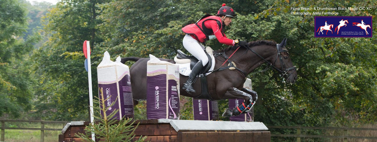 Approved bedding supplier to Blenheim Palace International Horse Show 2017